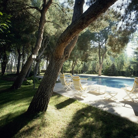 otras: View of trees near a swimming pool