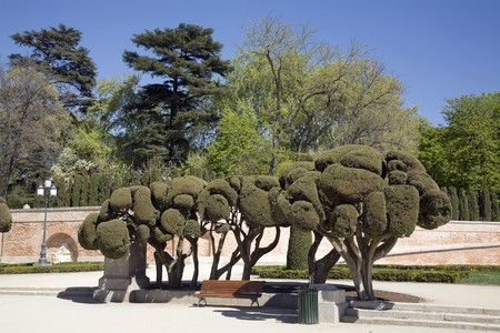 Sculpted trees in a park, Parque Del Retiro, Madrid, Spain Stock Photo - 7353932