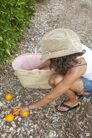 Young Latin Woman picking up oranges from the floor, near by orange trees, Valencia, Spain Stock Photo - 7824759