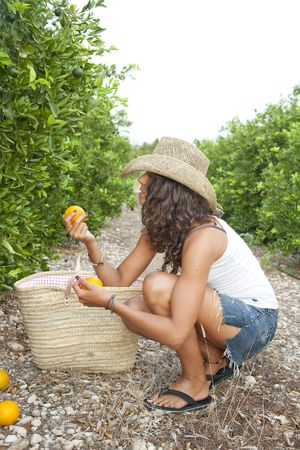Young Latin Woman picking up oranges from the floor, near by orange trees, Valencia, Spain Stock Photo - 7824758
