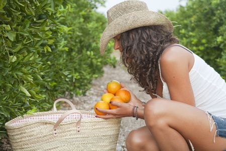 Young Latin Woman picking up oranges from the floor, near by orange trees, Valencia, Spain Stock Photo - 7824753