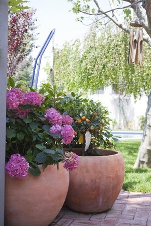 Flower pot with hydrangeas.