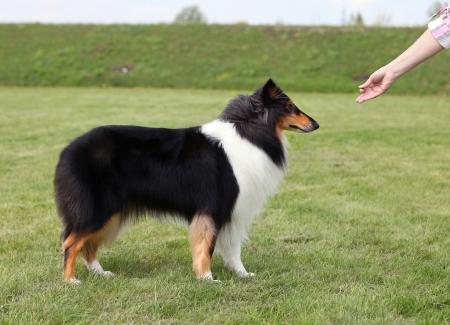 Mistress trains her dog photo