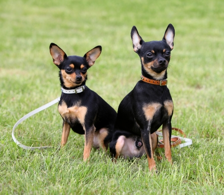 Two dogs sitting on the grass photo