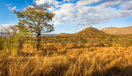kruger national park: African Landscape in Kruger National Park, South Africa