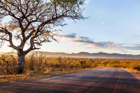아프리카 풍경에 크루 거 국립 공원, 남아 프리 카 공화국