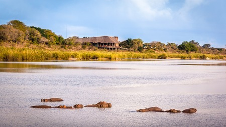 sabie sand: View of the Sabie Sand River with hippos and the Lower Sabie Rest Camp, Kruger National Park, South Africa