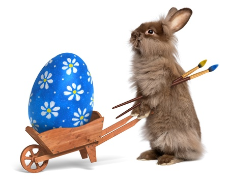 Cute Easter bunny rabbit with a little wheelbarrow and a blue painted Easter egg, isolated on white, CG+photo