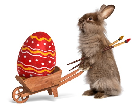 Cute Easter bunny rabbit with a little wheelbarrow and a red painted Easter egg, isolated on white photo