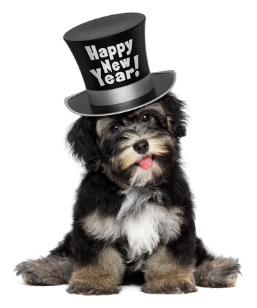 A happy smiling havanese puppy dog is wearing a black Happy New Year top hat, isolated on white background