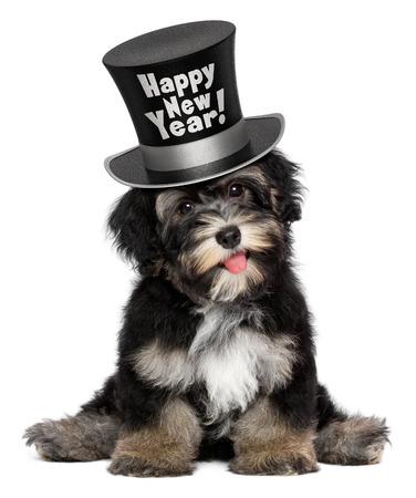 Een gelukkige glimlachende havanese puppy hond draagt een zwarte Gelukkig Nieuwjaar hoge hoed, geïsoleerd op witte achtergrond