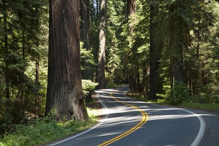 Winding road through the Redwoods, Humboldt Redwoods State Park, California, USA Stock Photo