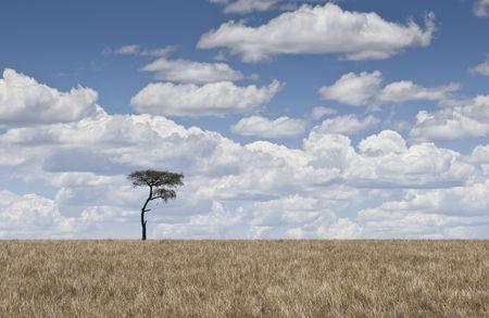 Tree and fluffy clouds, Masai Mara, Republic of Kenya, East Africa Stock Photo