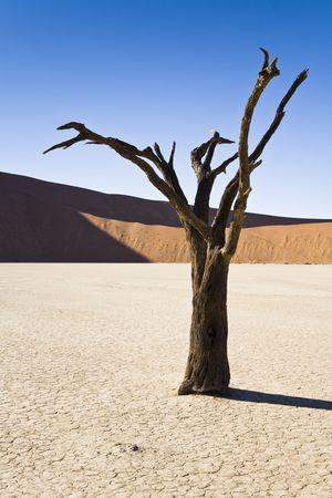 Dead Vlei, Namib Desert, Namib-Naukluft National Park, Republic of Namibia, Southern Africa Stock Photo