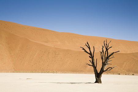 Dead tree, Dead Vlei, Namib Desert, Namibia, Africa