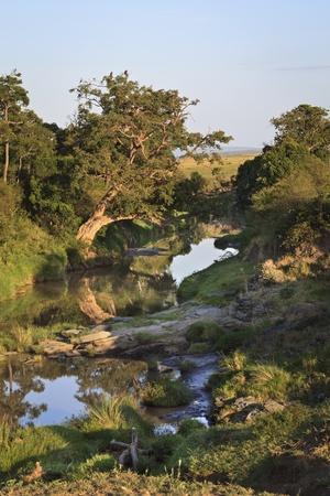 River in the Maasai Mara National Reserve, south-western Kenya, East Africa