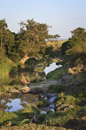 maasai mara: River in the Maasai Mara National Reserve, south-western Kenya, East Africa
