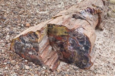 Colorful petrified wood, Petrified Forest National Park, Arizona, USA