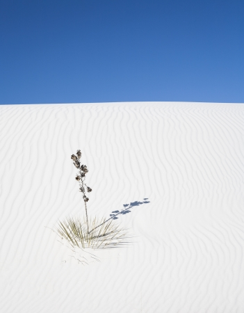 white sands national monument: White dune in White Sands National Monument, New Mexico, USA