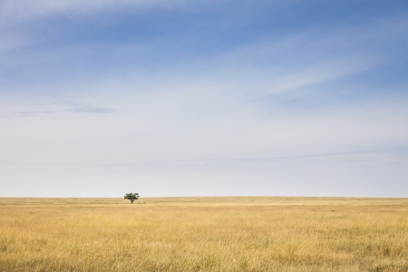 Lonely tree in the vast plains of the Serengeti, Tanzania, Southeast Africa Stock Photo