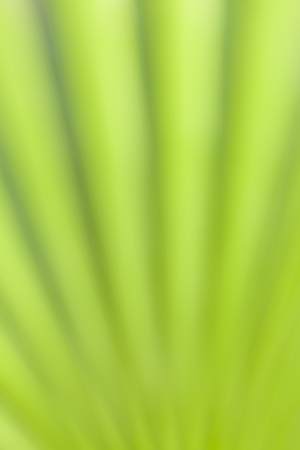 Green background, part of a palm leaf, intentionally out of focus Stock Photo