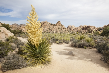 On a trail in Joshua Tree National Park, California, USA
