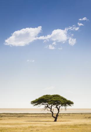 A tree and a cloud, Etosha National Park, northwestern Namibia, Africa