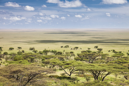 The vast plains of the Serengeti, Tanzania, Africa