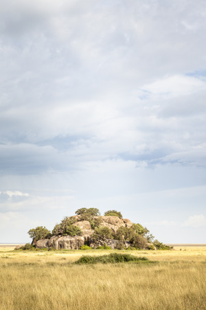 Typical landscape in the Serengeti National Park, Tanzania, East Africa