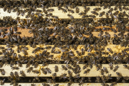 Bees gathered on top of a wooden hive box Stock Photo