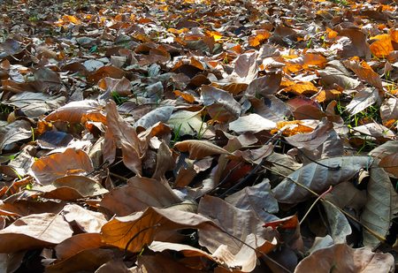 group of yellow and brown dry leaf fallen on ground in autumn season Stock Photo