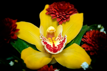 close up of a beautiful yellow orchid in flower arrangement