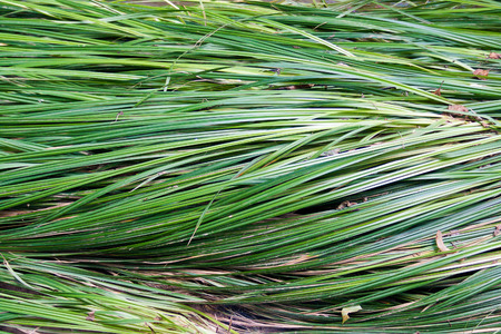 grass on the banks of the river, which lay down after a torrent Stock Photo