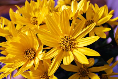 bouquet of seasonal garden yellow flowers, close-up
