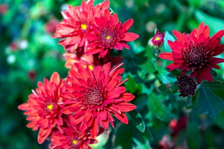 seasonal garden flowers, on a sunny day