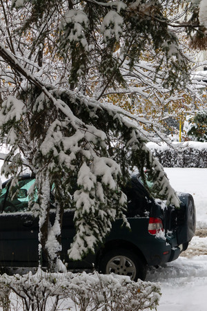 Winter day with snow covered road , fir and pine trees, and a car parked on a driveway.