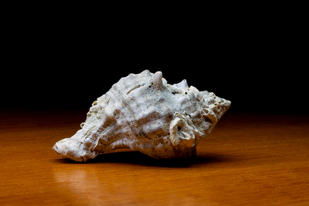 seashell on wooden table and dark background Stock Photo