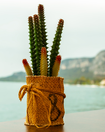 Small Cactus as a table decoration at a restaurant in Garda on the shores of Lake Garda in Italy.