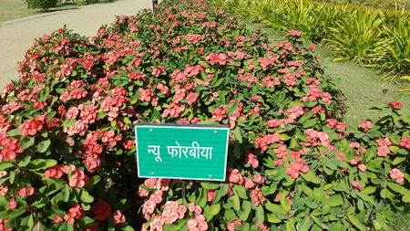 Ganesh udyan garden,Kota, Rajasthan developed on 25 hectares, has 8 thousand shady trees and colorful flowering plants, fit place for the family picnic.