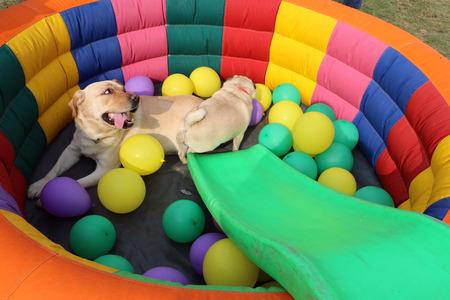 Dogs are resting & enjoying Pet Fed dog fair 2016 held in New Delhi. Editorial