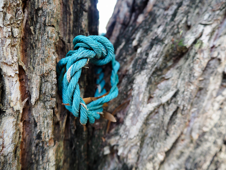 clambering: blue rope on the tree Stock Photo