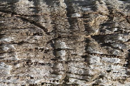 Close - up of beautiful bark palm tree Фото со стока