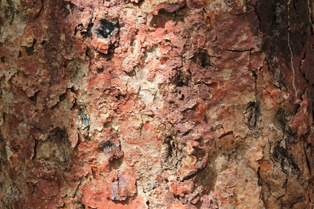 Close - up of beautiful textured bark of a tropical tree
