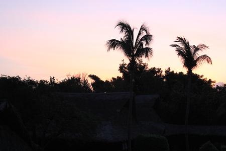 Black silhouettes of palm trees at dawn Фото со стока