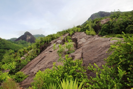 Mountain landscape. Green tropical trees on the mountain slopes.