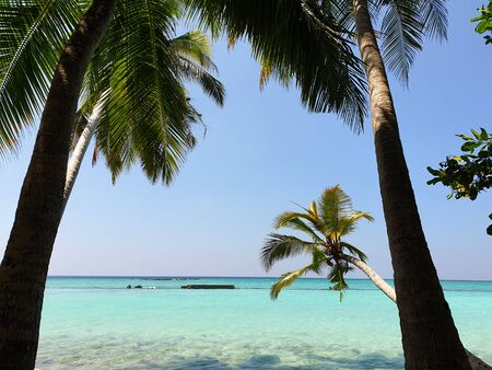 Maldives. Tropical trees on the shore of the blue ocean.