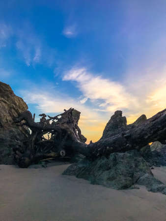 Driftwood on beach between large rocks at sunrise, vertical photo.