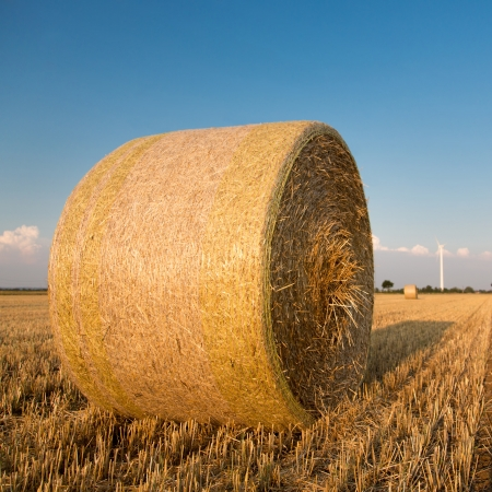 thresh: Straw bales in the field at sunset