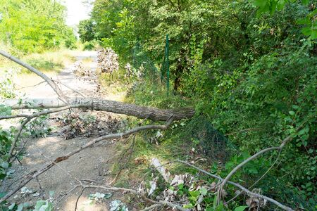 Hurricane has damaged a tree which felt on a street. Road blocked by damaged tree.