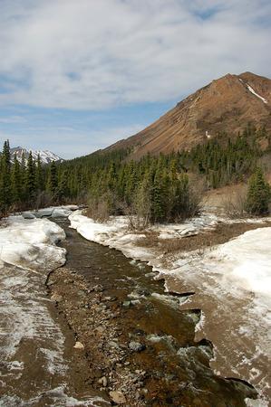 denali: Denali National Park